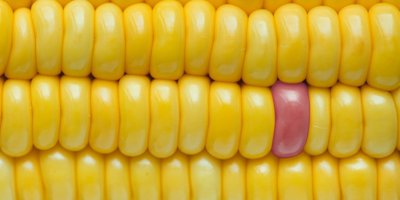 https://amsac.org.mx/wp-content/uploads/2019/03/close-up-corn-delicious-1126285-1280x640.jpg